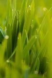 Fresh Spring Grass Stock Photography