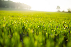 Fresh spring grass with drops Stock Photos