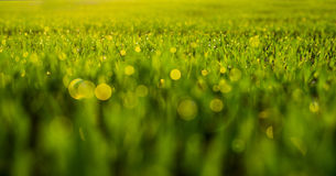 Fresh spring grass with drops Stock Photo
