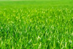 Fresh spring grass on the field - background stock images