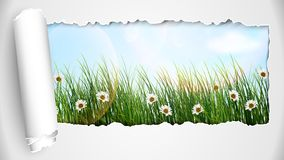 Fresh spring grass with flowers on a sunny day Stock Photo