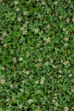Fresh spring grass. Green leaf. Natural background texture. Ideal for use in the design fairly. Fresh spring grass. Green leaf. Natural background texture Royalty Free Stock Image