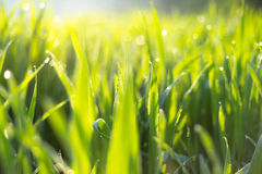 Fresh spring grass in the morning Stock Photos
