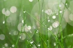 Fresh spring grass selective focus Stock Photo
