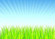 Fresh Spring Grass Vector Royalty Free Stock Image