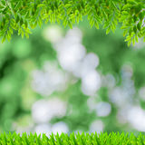 Fresh spring green background with green leaves Royalty Free Stock Photos