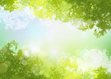 Fresh Spring Green background with soft sun light Royalty Free Stock Photography
