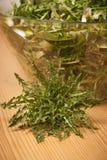 Fresh spring green  dandelion salad closeup Royalty Free Stock Photography
