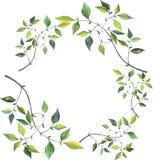 Fresh spring green foliage frame. Watercolor illustration. vector illustration