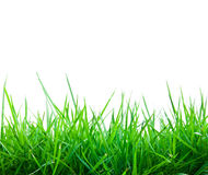 Fresh spring green grass. Isolate Royalty Free Stock Photography