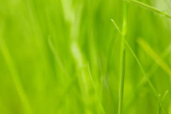 Fresh spring green grass Royalty Free Stock Image