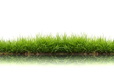 Free Fresh Spring Green Grass Royalty Free Stock Image - 19401866