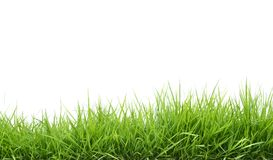 Fresh Spring Green Grass Stock Image