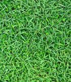 Fresh spring green grass Stock Photos