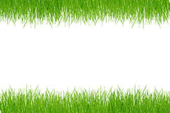 Fresh spring green grass. Above angle backgrounds clean close-up closeup royalty free stock photo
