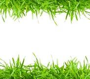 Fresh spring green grass Stock Photos