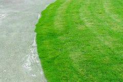 Fresh spring green grass Stock Photography