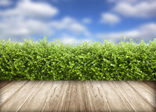 Fresh spring green grass with blue sky Stock Photos