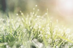 Fresh spring green grass with bokeh dew drop and sunlight backg Stock Image