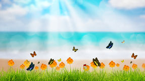 Fresh spring green grass with butterfly and flower near beach, S Stock Images