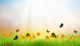 Fresh spring green grass with butterfly Royalty Free Stock Photos