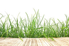 Fresh spring green grass and cement road isolated stock image
