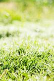 Fresh spring green grass Stock Photo