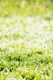 Fresh spring green grass Stock Images
