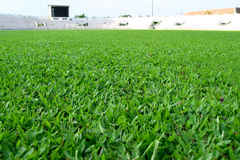 Fresh spring green grass in football field Stock Photos