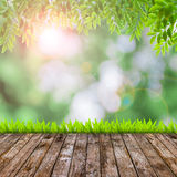 Fresh spring green grass with green bokeh and flare and wood flo Royalty Free Stock Images