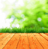 Fresh spring green grass with green bokeh and sunlight and wood. Fresh spring green grass and ground wood Stock Images