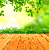 Fresh spring green grass with green bokeh and sunlight and wood Stock Image
