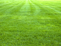 Free Fresh Spring Green Grass, Green Grass Texture Or Background Royalty Free Stock Images - 82254789