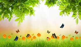 Fresh spring green grass with green leaf and butterfly. Royalty Free Stock Image