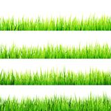 Fresh spring green grass isolated. EPS 10 Stock Photography