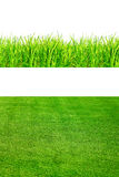 Fresh spring green grass Isolated On White Royalty Free Stock Photography