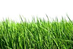 Fresh spring green grass Royalty Free Stock Photo