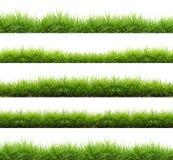 Fresh spring green grass isolated Stock Photos