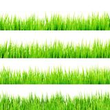 Fresh spring green grass Isolated On White. EPS 10 Royalty Free Stock Photo