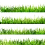 Fresh spring green grass Isolated On White. EPS 10 Stock Photos