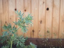 Fresh spring green grass and leaf plant over wood fence background royalty free stock photography