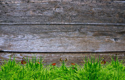 Fresh spring green grass and leaf plant Stock Image