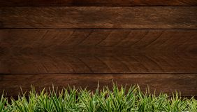Fresh spring green grass and leaf plant over wood fence background. Wood background Grass frame stock image
