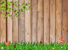 Fresh spring green grass with leaf plant over wood fence Royalty Free Stock Image