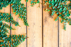 Fresh spring green grass and leaf plant over wood plank brown texture background. Stock Images