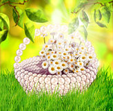 Fresh spring green grass and leaves with flower basket in sunlight Royalty Free Stock Images