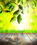 Fresh spring green grass and leaves with green bokeh, sunlight and wood floor Royalty Free Stock Image