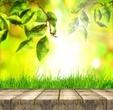 Fresh spring green grass and leaves with green bokeh, sunlight and wood floor Stock Images