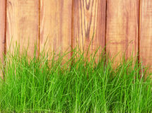 Fresh spring green grass over wood fence Stock Photography