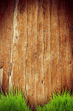 Fresh spring green grass over wood fence background Royalty Free Stock Image